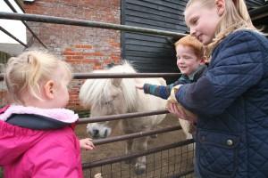 Children feeding a pony