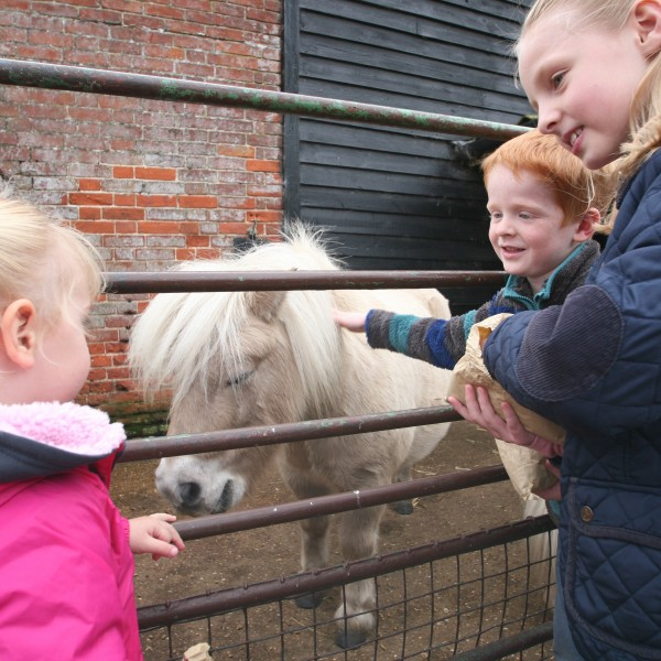 Children feeding a pony