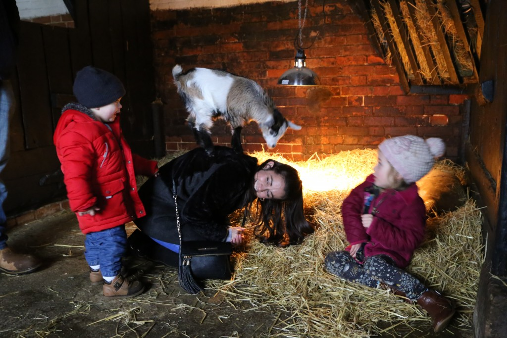 Kids, Lambs and more at Easton Farm Park