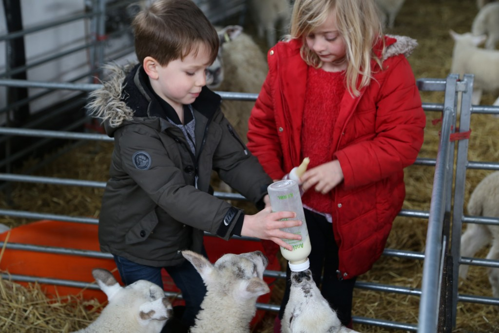 Feeding animals at Easton Farm Park
