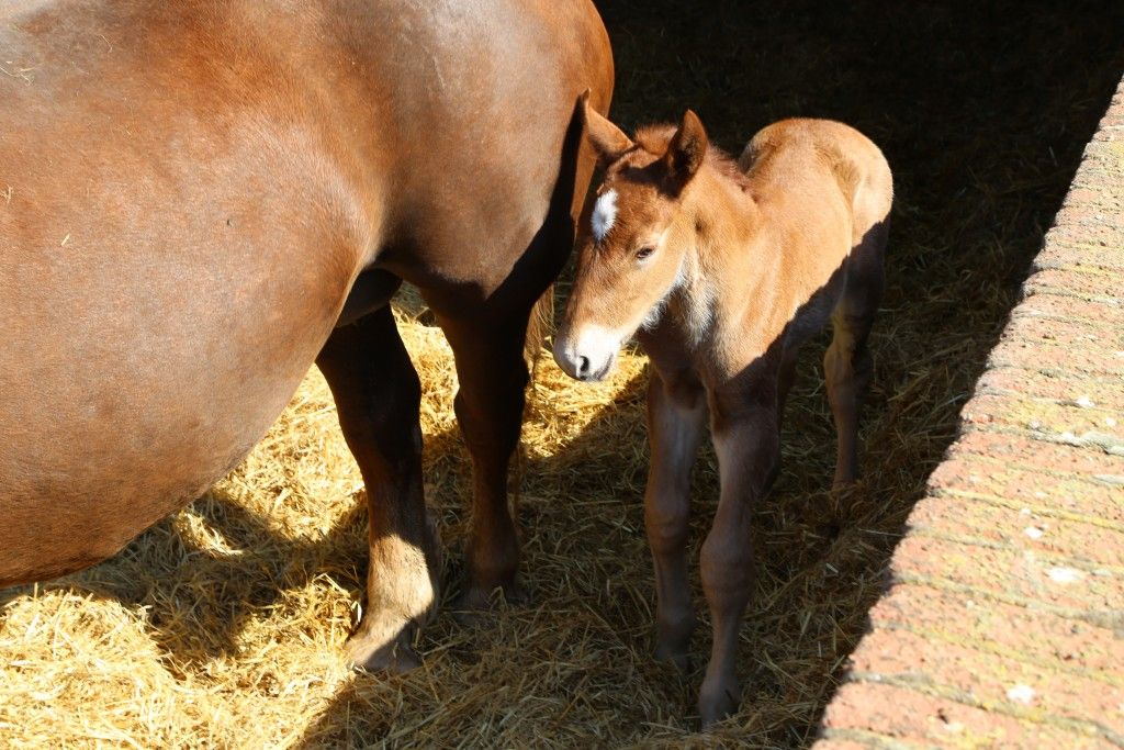 Lily had her foal